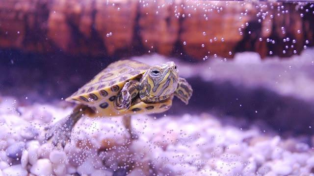 Best Filter System For Turtles