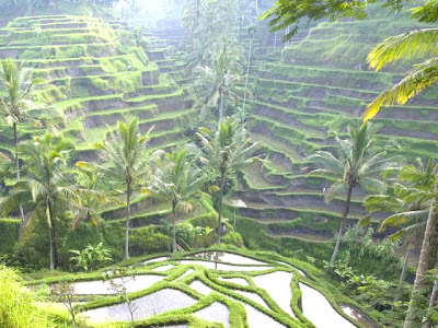 Tegal lalang best place of Bali