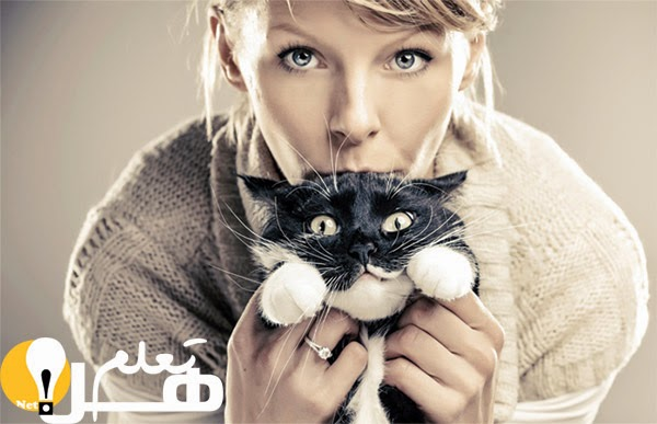 e27d94b4c ارقام واحصائيات عن القطط
