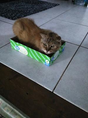 cat, crochet
