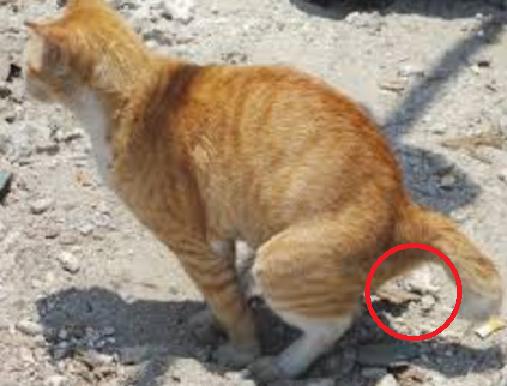 Lucu, Ini Alasannya Kucing Selalu Mengubur Kotorannya Sendiri