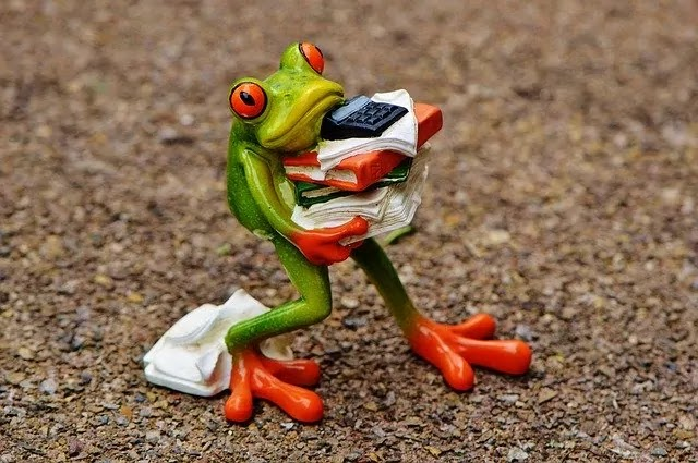funny frog image with cloths