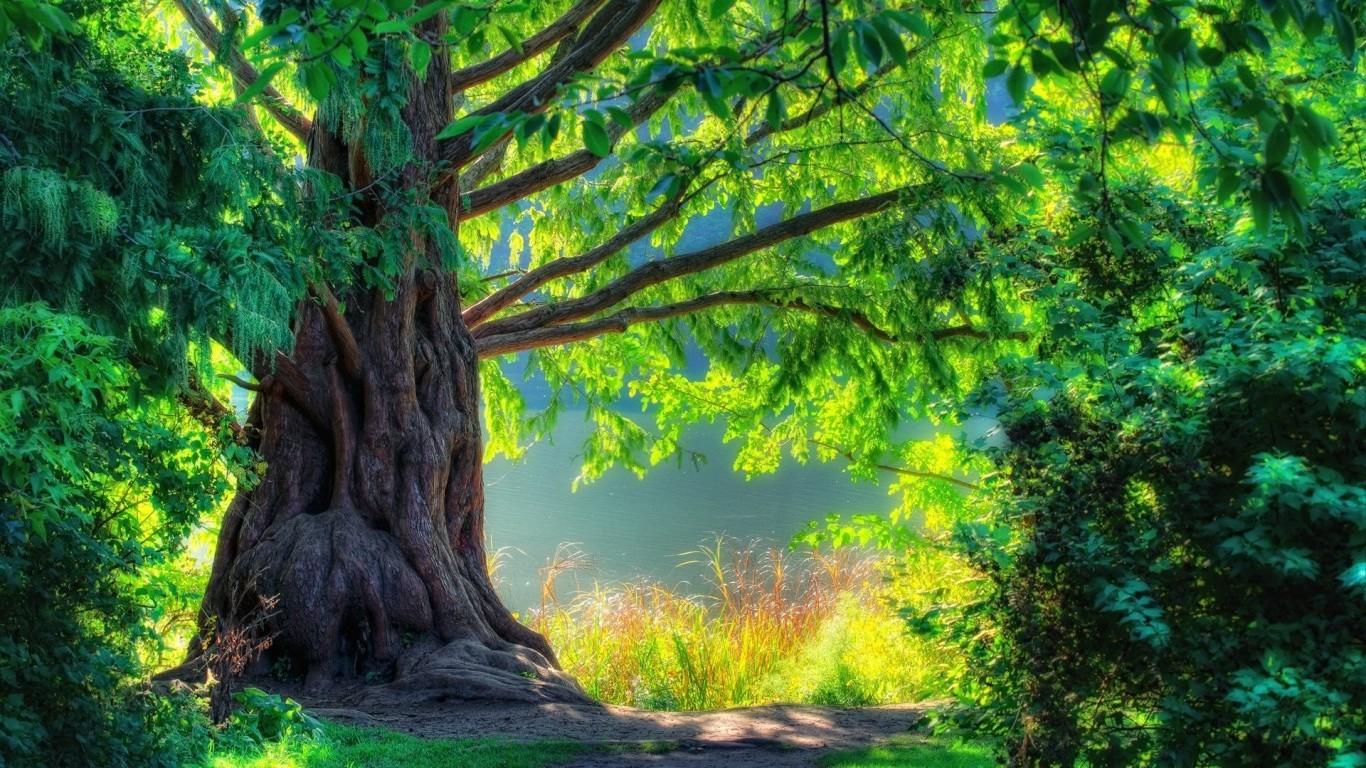 Wallpaper Hd 1080p 3d Nature