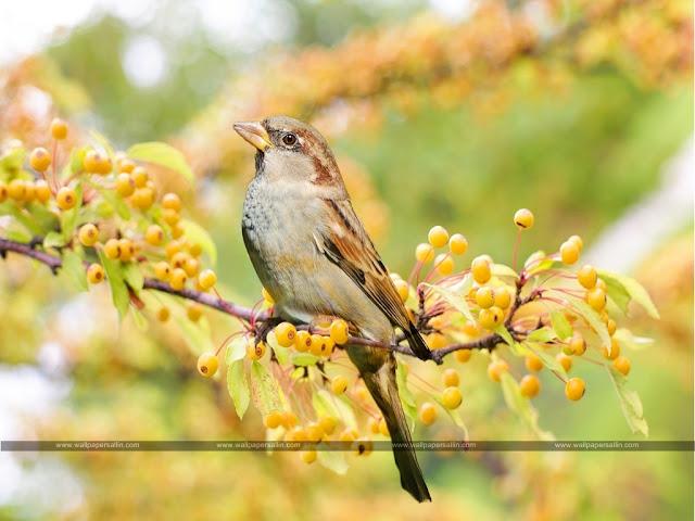 Bird Images | Bird Wallpaper HD Free Download