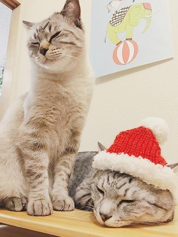 クリスマスなんか知らん