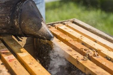 Včelařské zajímavosti