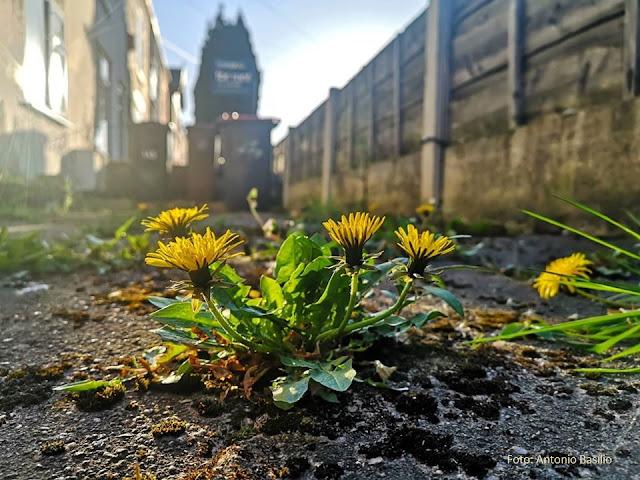 Flores nascem entre rachaduras de concreto de rua, com prédios ao fundo