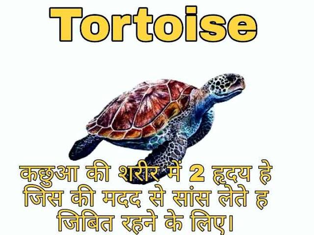 Tortoise ओर Turtle कछुए की अंतर क्या है ?