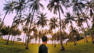 kejayaan bisnis dan  keindahan kelapa indonesia