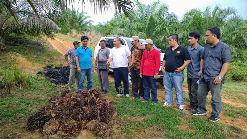 Keseharian-Redhahari-mengurusi-perkebunan-kelapa-sawit