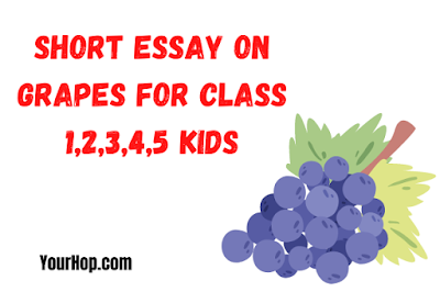 Essay on Grapes