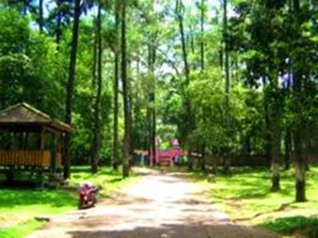Hutan Punti Kayu : Wisata Hijau Di Tengah Kota Palembang