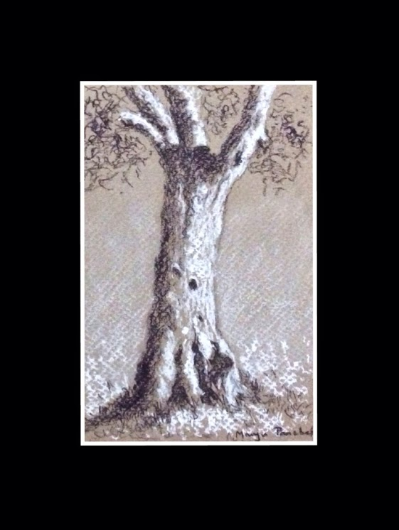 Tree sketching using charcoal and white soft pastel by Manju Panchal