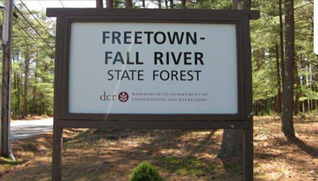 Freetown Forest Documentary