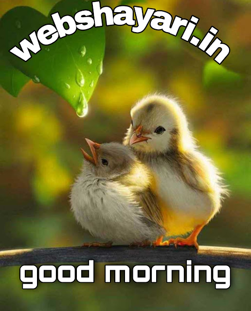 cute birds good morning images