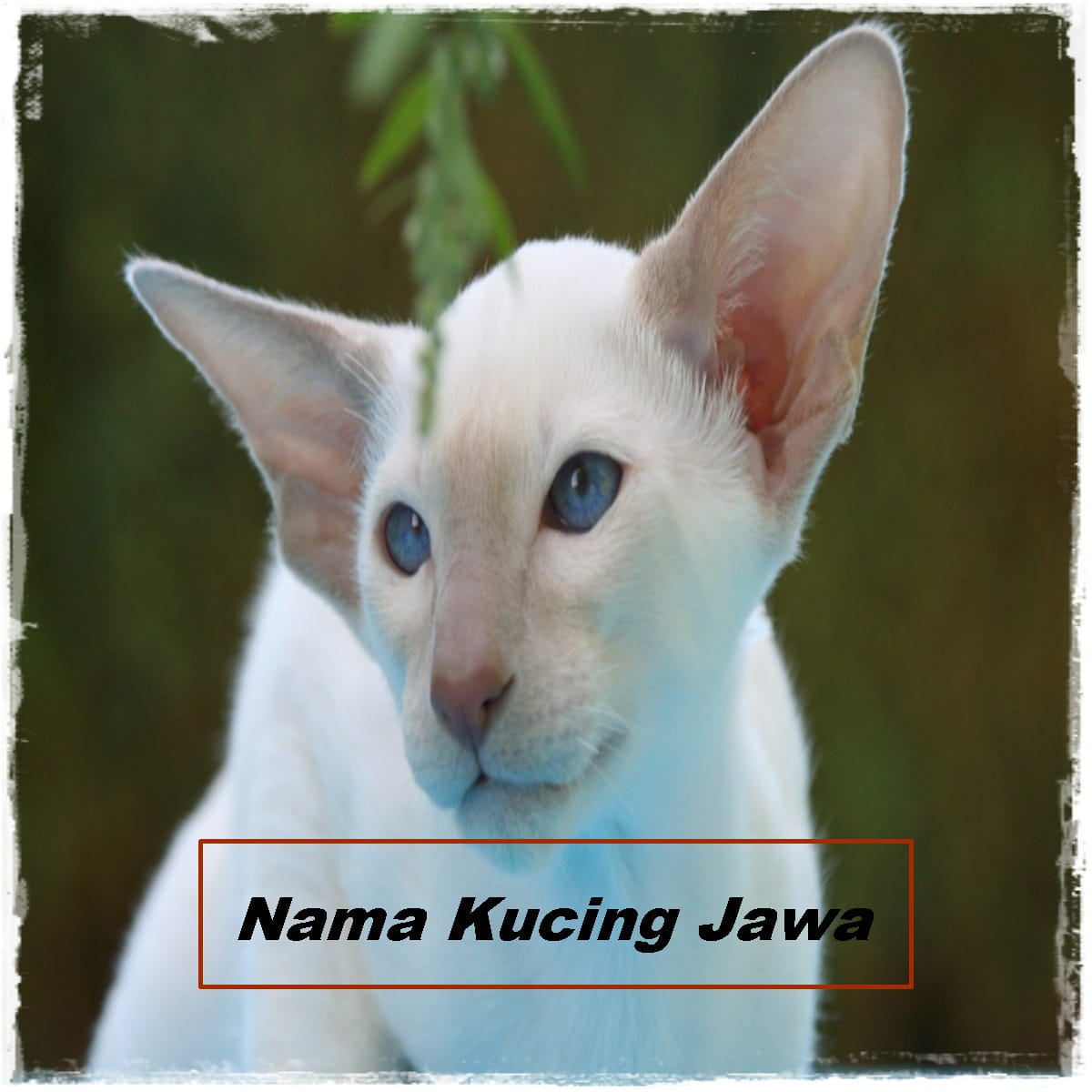 Nama Kucing Jawa
