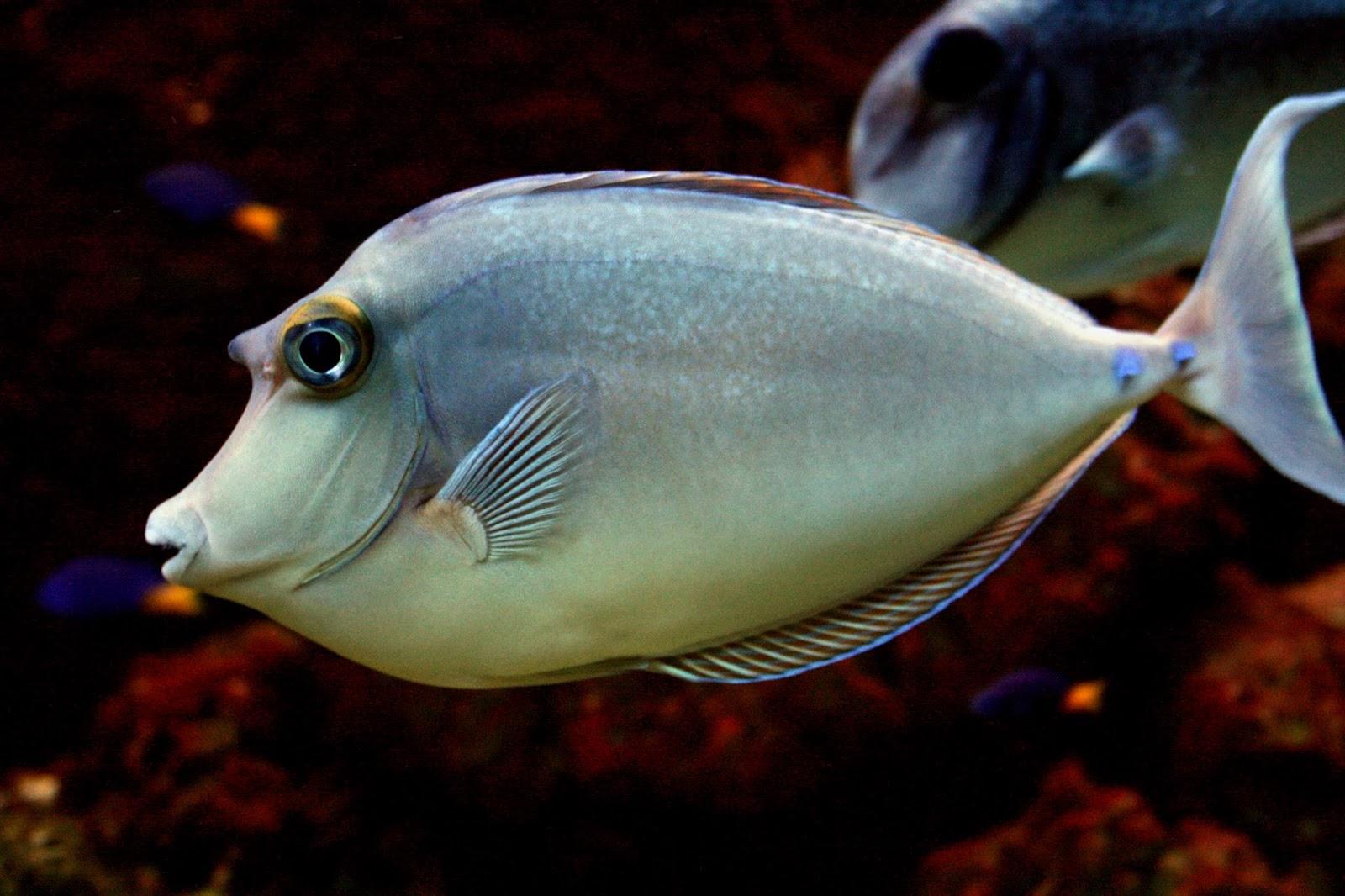Perikanan Kota Mataram Jenis Jenis Ikan Laut 1