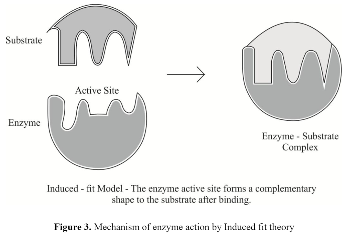 Mechanism of Enzyme Catalysis