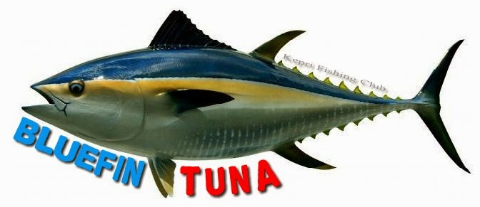 Ya siapa yang tidak kenal dengan ikan yang satu ini Mengenal Jenis Ikan Tuna