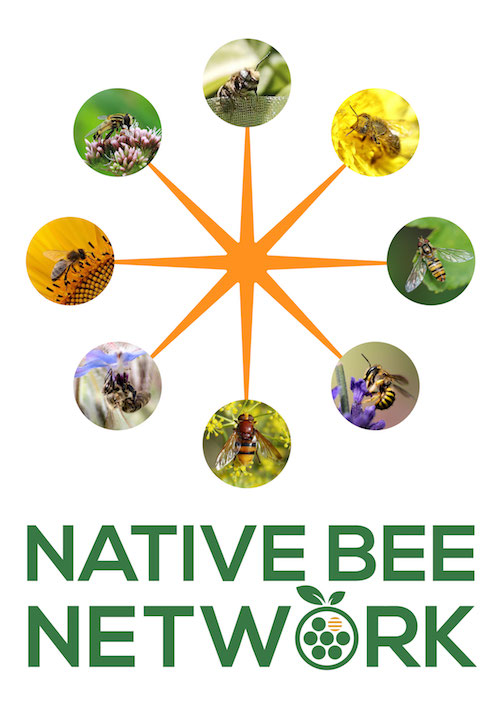 Support NATIVE BEES in Your Garden