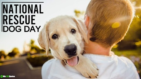 23 [Best] National Rescue Dog Day 2020 Quotes, Sayings & Images