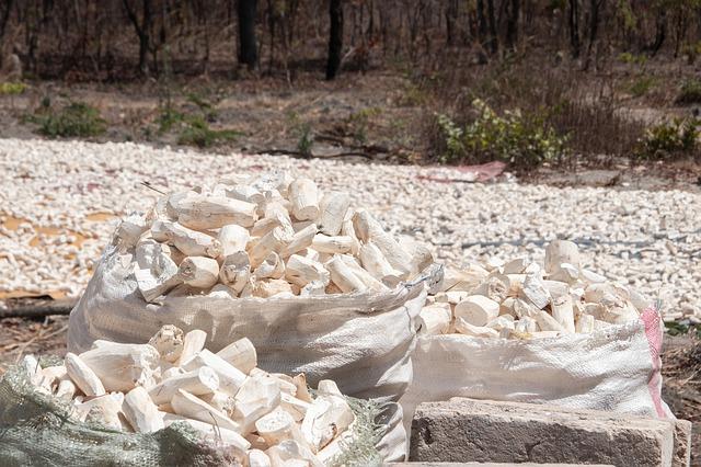 Muhammadiyah Ekspor 60 Ton Tepung Singkong Ke Inggris Setiap Bulan