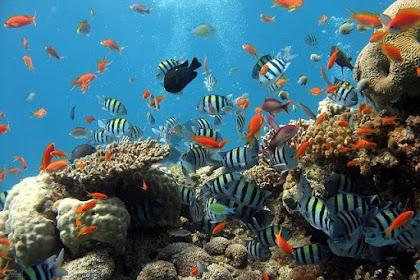 Pakai Cara Ini Agar Aquarium Tidak Bau Amis