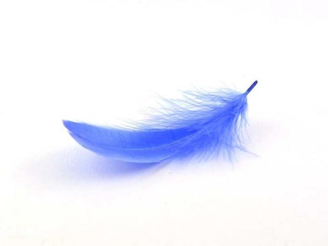 Une plume de douceur