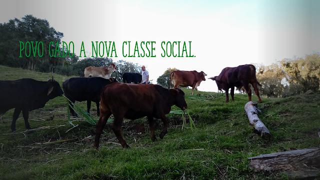 A foto mostra o gado em pasto verde. Povo gado a nova classe social de direita do Brasil.