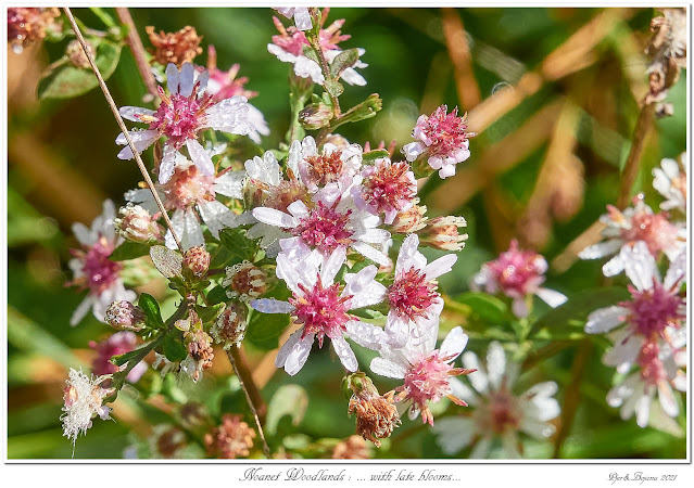 Noanet Woodlands: ... with late blooms...