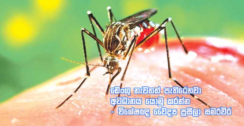 https://www.gossiplankanews.com/2019/06/dengue-again.html