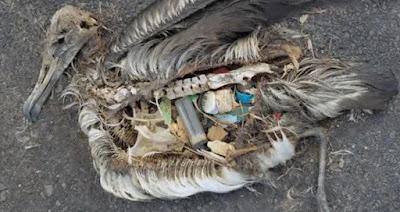 Ave con plástico en su interior