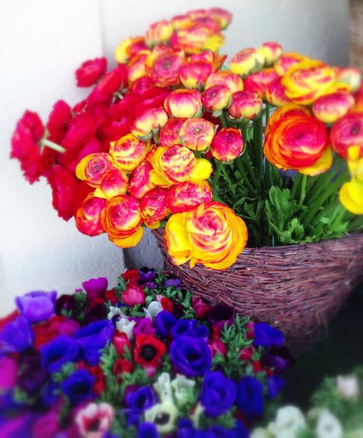flores Aix en Provence