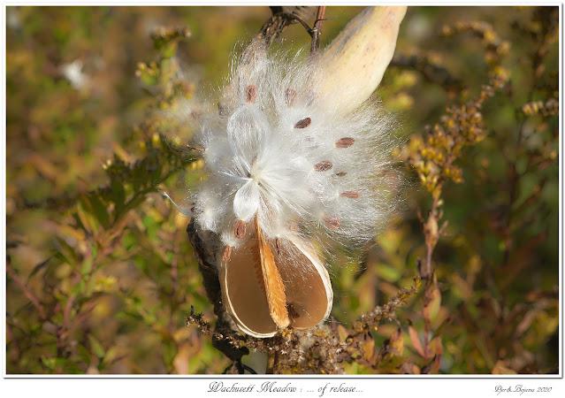 Wachusett Meadow: ... of release...