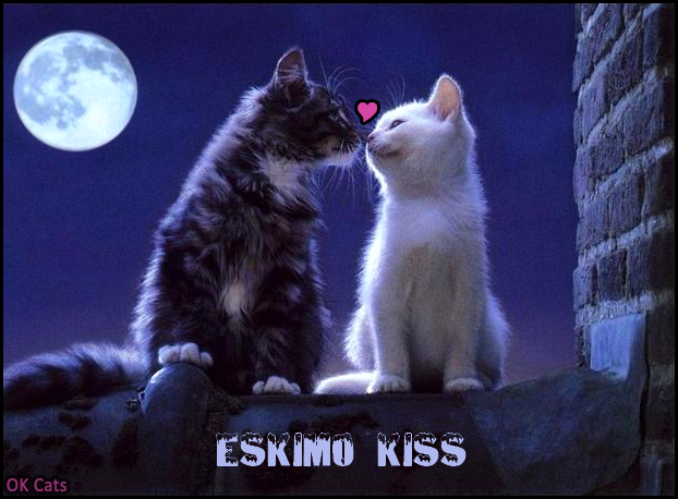 Photoshopped Cat picture • Spring time... Love ♥ is the air... Cute Eskimo kiss [cat-gifs.com]