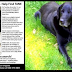 Father Searching For Missing Diabetic Issues Support Canine Who Can not Bark As A Result Of A Surgical treatment
