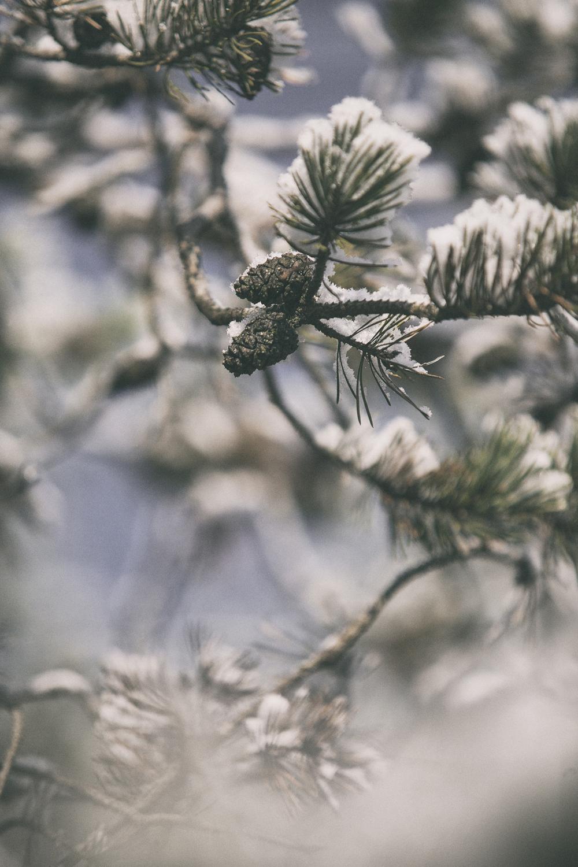 kuura, talvi, syksy, nature, naturephoto, luontovalokuva, autumn, fall, winter, photographer, frida steiner, valokuvaaja, visualadict, valokuvablogi, visualaddictfrida, espoo, nuuksio
