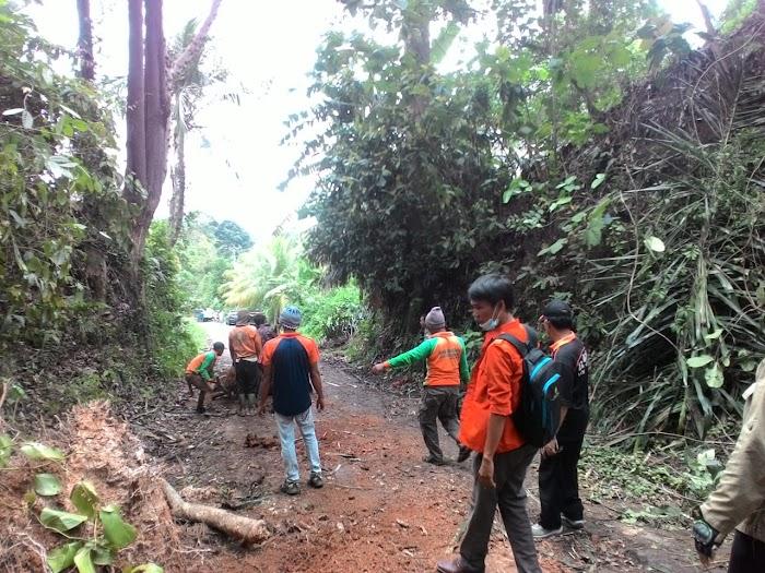 Pohon Tumbang di Jalan Desa Canggung Kec.Rajabasa Lamsel.