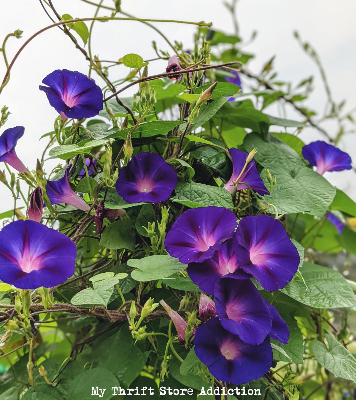 Flower power late summer blog hop