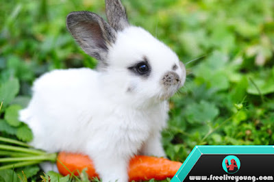 How to take Care Baby Rabbit