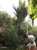 Owner shows Nikau palm - Te Kainga Marire, New Zealand