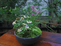 山野草のイトラッキョウとノギクとヘビイチゴの草物盆栽の秋の姿