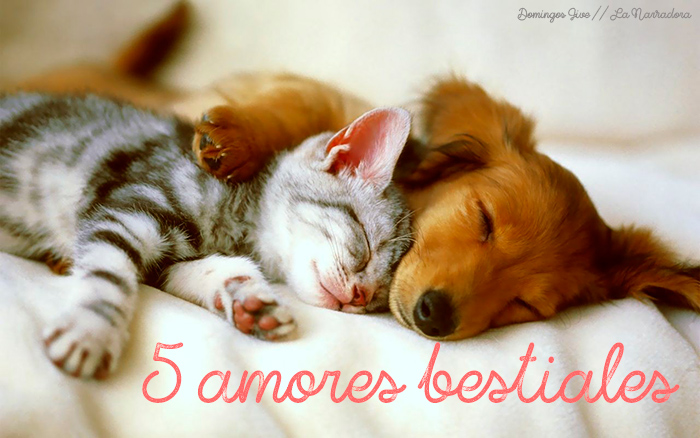 5-amores-bestiales