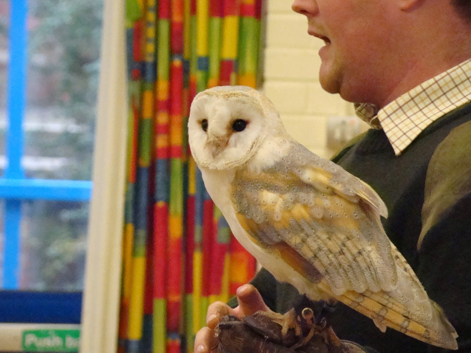 Hitcham's Blog: Barn Owl in School Assembly