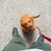 Πιλοτικό πρόγραμμα για τους σκύλους που περιμένουν έξω από τα μαγαζιά...