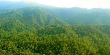 Taman Nasional Bukit Tiga Puluh taman nasional bukit tiga puluh riau taman nasional bukit tiga puluh jambi taman nasional bukit tiga puluh