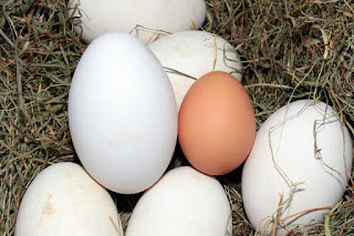 reddish-brown and white eggs