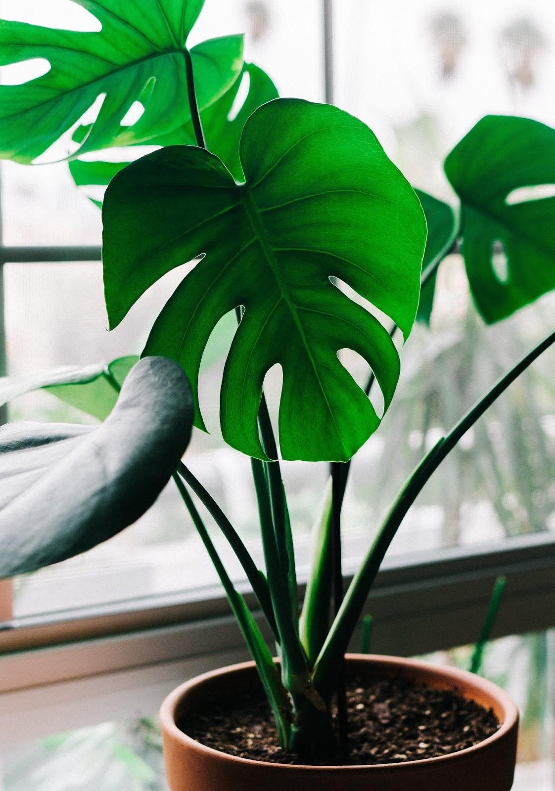 HD Green Plants Wallpapers