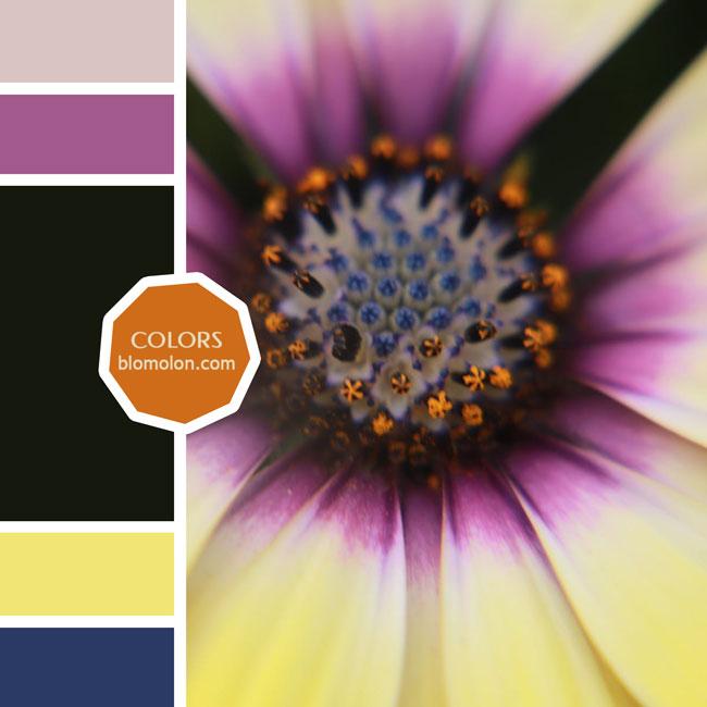 variedad_en_color_moodboards_3a