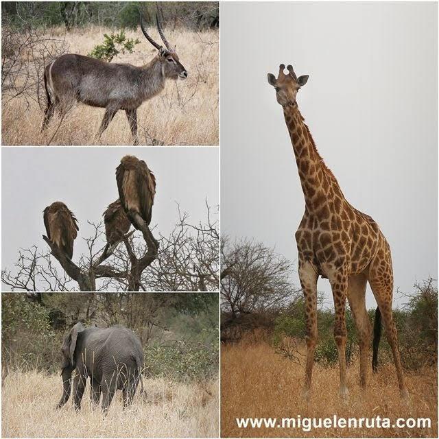 Fauna-Satara-Kruger